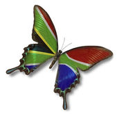 Republic of South Africa flag on butterfly — Stock Photo