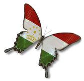 Tacikistan bayrağı kelebek — Stok fotoğraf