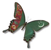 Turkmenistan flag on butterfly — Stock Photo
