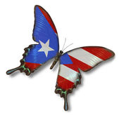 Puerto Rico flag on butterfly — Stock Photo