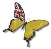 Niue flag on butterfly — Stock Photo
