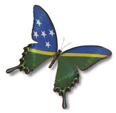 Solomon Islands flag on butterfly — Stock Photo