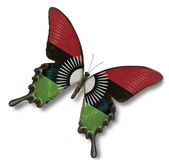 Malawi flag on butterfly — Stock Photo