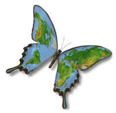 Map of Earth on butterfly — Stock Photo
