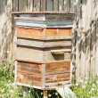 Stock Photo: Beehives in apiary