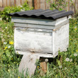 Stock Photo: Beehives in the apiary