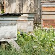 Beehives in the apiary — Stock Photo #11023593