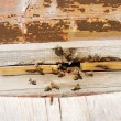 Bees near the entrance into the hive — Stock Photo