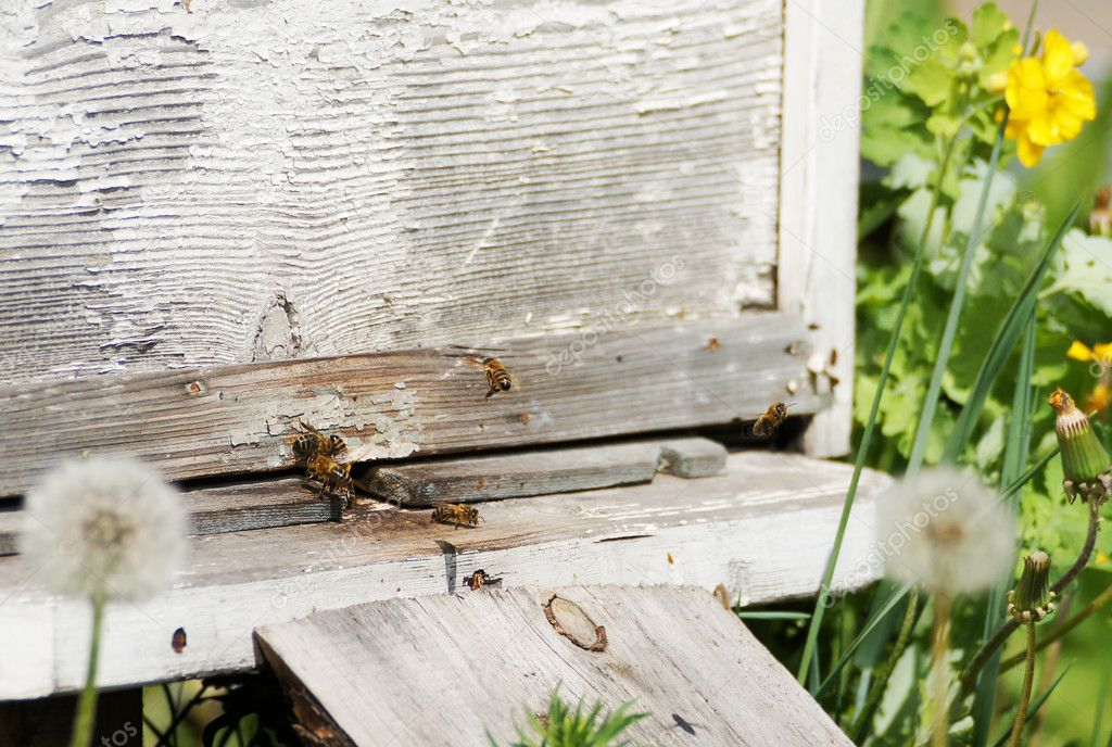 Beehives in the apiary — Stock Photo #11023570