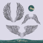 Wings vector set for decoration and design — Stockvector