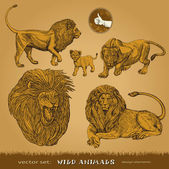Wild animals vector set: lions, lioness and lion cub for decoration and design — Stock Vector