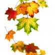 Colorful autumn leaves falling down — Stock Photo