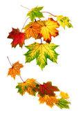 Aşağı düşen renkli sonbahar yaprakları — Stok fotoğraf