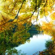 The magical colors of autumn — Stock Photo #12014593