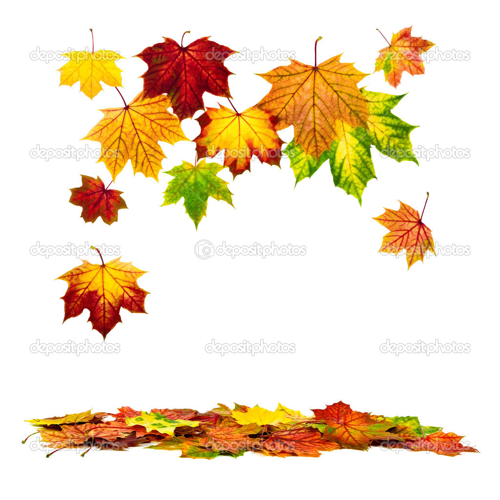Multi-colored autumn leaves falling down, with white copy space  Stock Photo #12196997