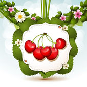Ripe cherry — Stock Vector