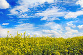 Agriculture in the yellow field. — Stock Photo