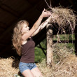 图库照片: Women and hay
