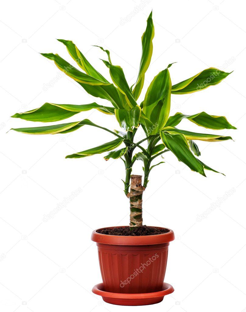 Porte plantes dint rieur for Porte plantes dinterieur