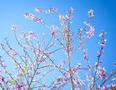 Pembe çiçek — Stok fotoğraf