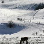 Winter landscape new 8 — Stock Photo