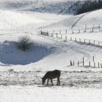 Winter landscape new 9 — Stock Photo