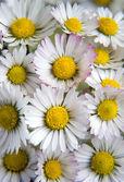 Flower 20 — Stock Photo