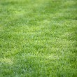 Grass field new 1 — Stock Photo #10796476