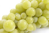 Grapes 12 — Stock Photo