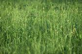 Grass field new — Stock Photo