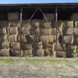 Agriculture hay bale farming — Stock Photo