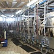 Cow farm agriculture milk automatic milking system — Stock Photo #11203096