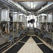 Cow farm agriculture milk automatic milking system — Stock Photo #11203288