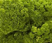 Salade persil aliments légumes cuisine végétarienne — Photo