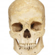 Skeleton skull bones — Stock Photo