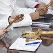 Постер, плакат: Education university student bone anatomy biology
