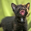 The black kitten mews on a green background — Stock Photo