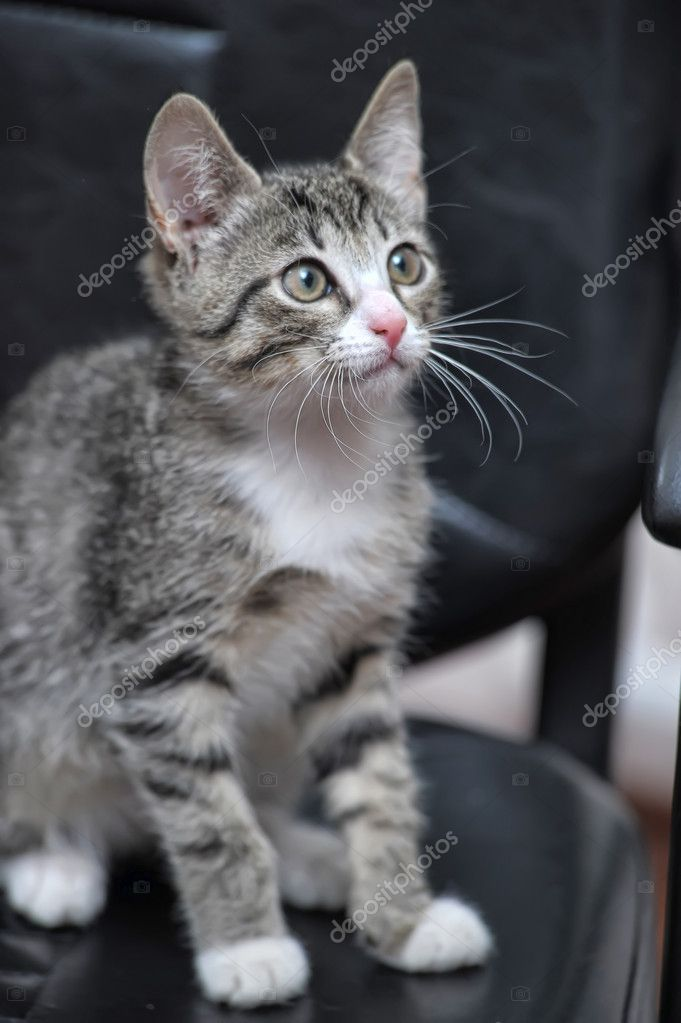 Cute Tabby Kitten  Stock Photo #10960423