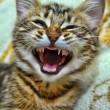 Stock Photo: Kitten yawning
