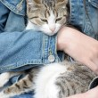 Cat in her arms — Stock Photo #11433919