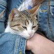 Cat in her arms — Stock Photo #11433927