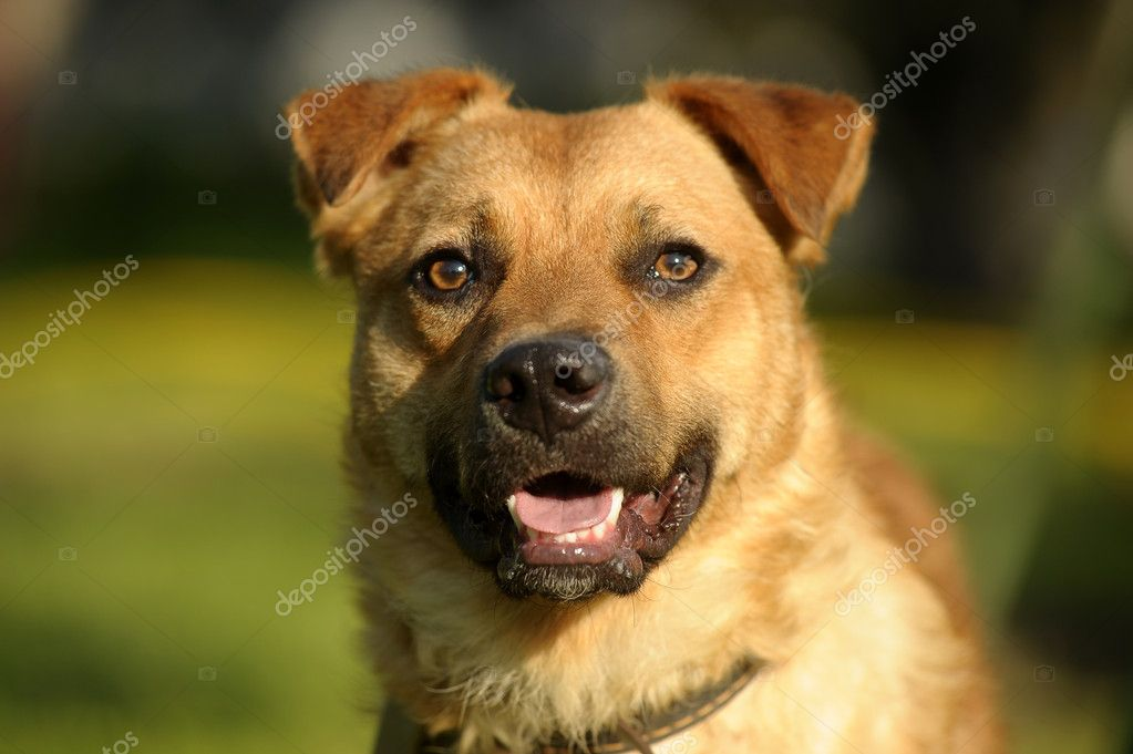 Dog in the park — Stock Photo #11842108