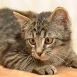 Kitten — Stock Photo #11946754