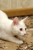 Funny white kitten — Stock Photo