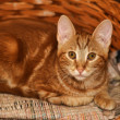 Ginger tabby cat — Stock Photo #12138413