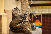 Cat and Scratching Post — Stock Photo