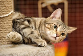 Kat en scratching post — Stockfoto