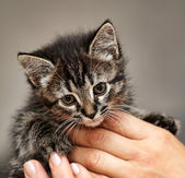 Kitten in her arms — Stock Photo