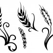 Wheat and rye — Stock Vector