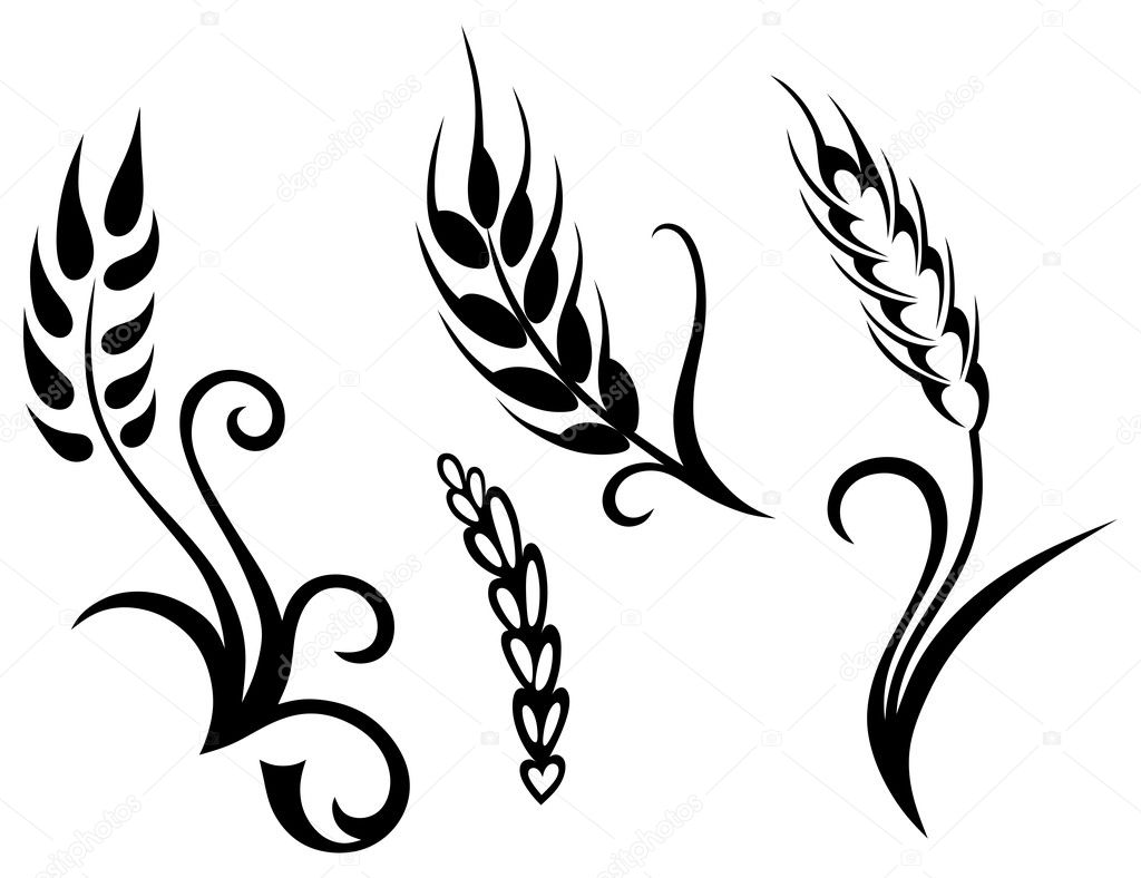 Wheat and rye   Vector...